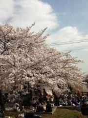 Sakura1__2