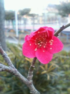 小さな春、見〜っけ!