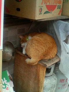猫に学ぶ…?